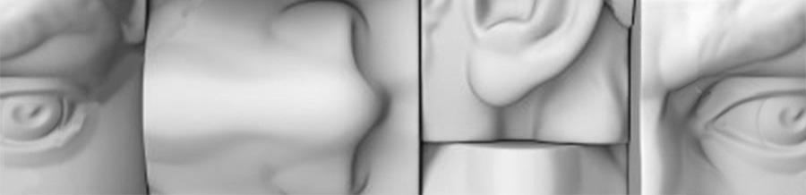 Анатомические детали из гипса