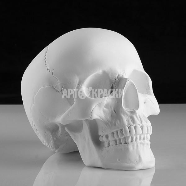 Череп анатомический из гипса