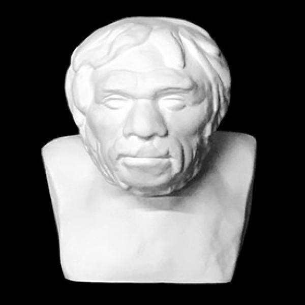 Бюст Неандертальца из гипса