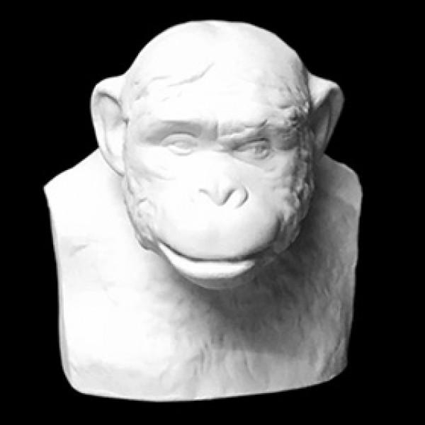 Бюст шимпанзе из гипса