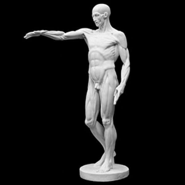 Фигура экорше по Гудону из гипса
