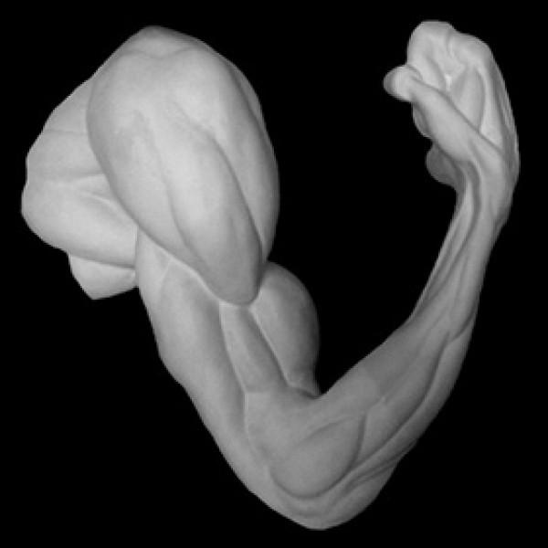 Рука анатомическая согнутая в локте из гипса