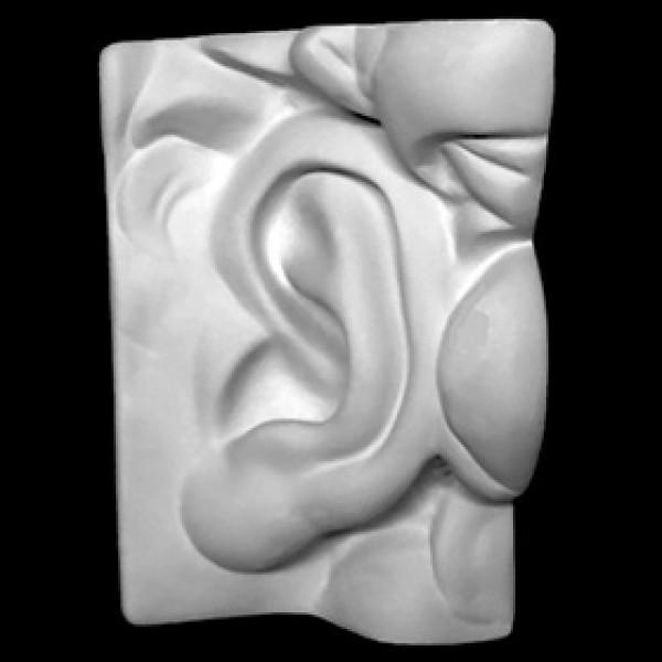Ухо Давида левое из гипса